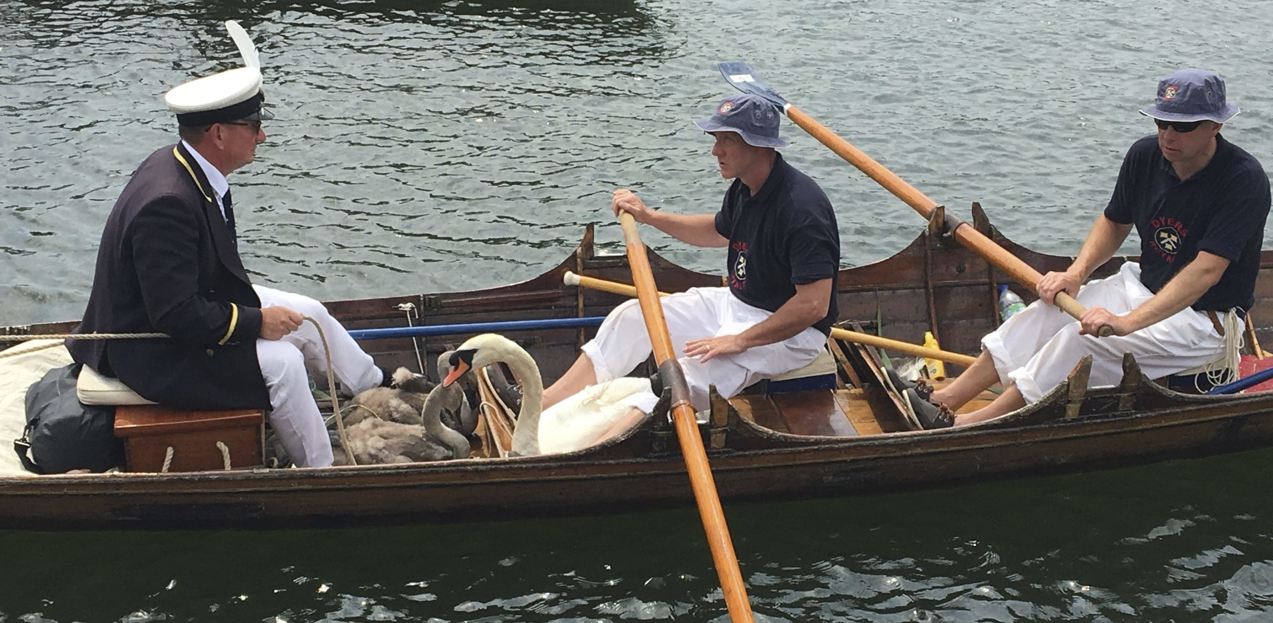 Day excursions Swan Upping